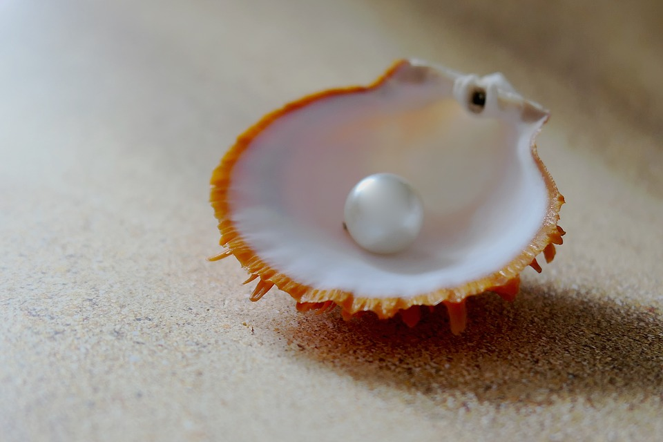 `a pearl in a shell